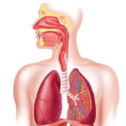 the Effects of Marijuana on the Lungs