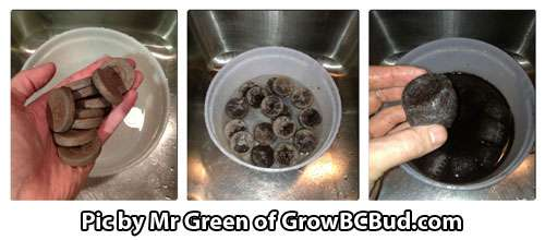 Let the Jiffy pellets soak in warm water until they expand - How to germinate marijuana seeds